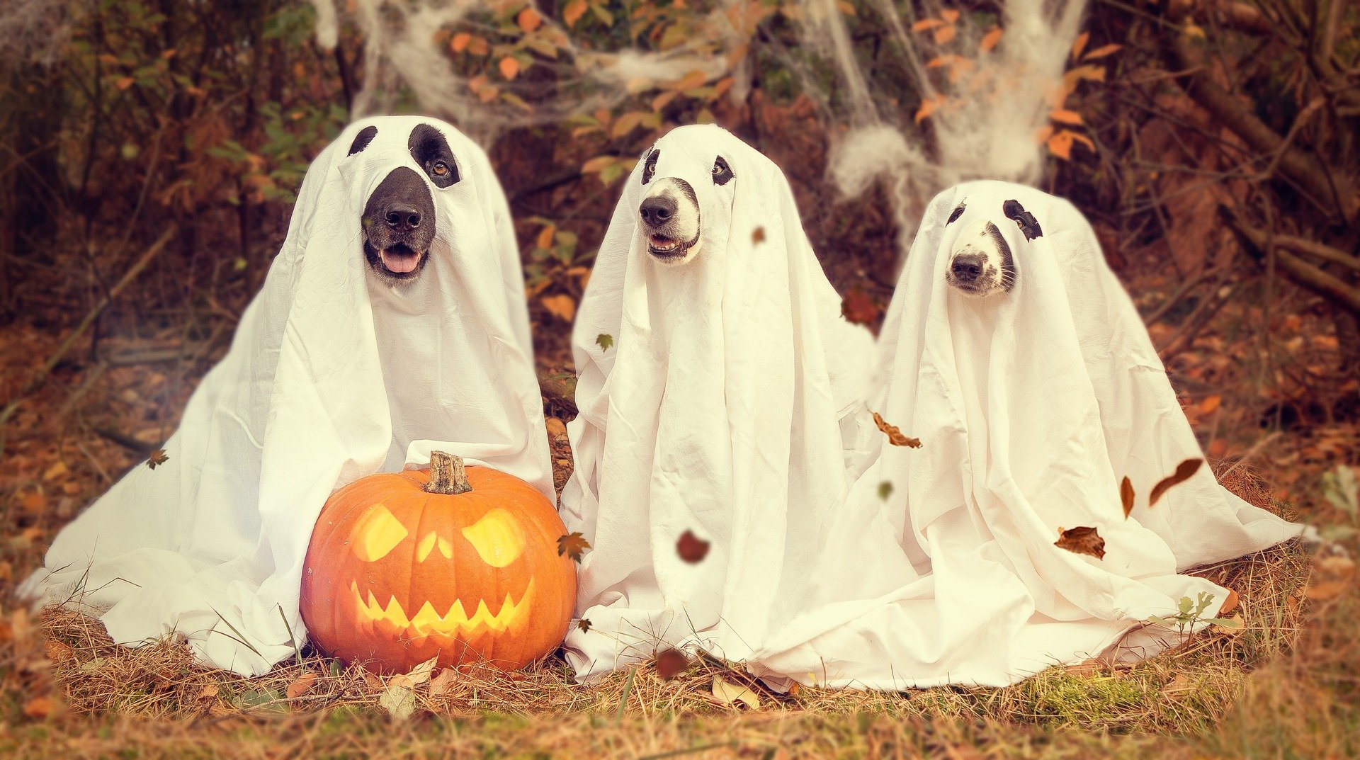 Write a Spooktacular Ghost Story!